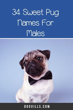 66 Perfect Pug Dog Names for Male & Female Pups - DogVills All About Puppies, Pug Names, Pet Pug, Fawn Pug, Secret Life Of Pets, Puppy Chow, Dog Signs, Dog Training, Puppy Love