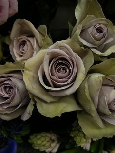 AMNESIA ROSE: Available in purple-gray