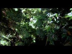 Ambra. Honour and glory - YouTube