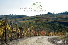 #Easter #holidays are the perfect occasion to visit and enjoy the new  #TENUTASANTHELENA #Osteria & #Enoteca by #Fantinel  Località Sant'Elena, 14 - Vencò - Dolegna del #Collio Info: +39 328 0408669
