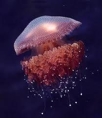 gellyfish - Cerca con Google###