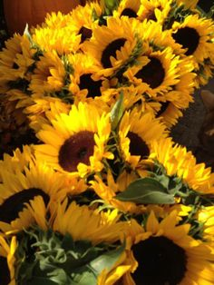 Bunches and Bunches of Sunflowers