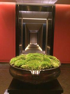 Green Plants, Green Flowers, Flower Vases, Flower Art, Yoga Garden, Flora Design, Moss Terrarium, Interior Plants, Plant Art