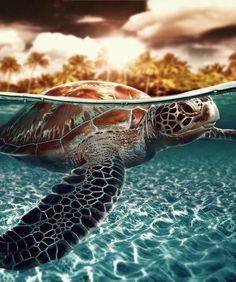 www.villabuddha.com  Bali  Indonesie  Turtle