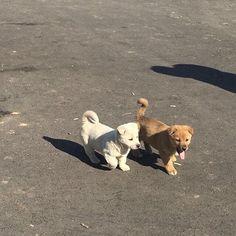 Dog Breeds Little .Dog Breeds Little Cute Puppies, Dogs And Puppies, Cute Dogs, Doggies, Animals And Pets, Baby Animals, Cute Animals, Shiba Inu, Cute Creatures