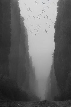Tuscan Mistery Photo by Christian Brogi — National Geographic Your Shot Dark Photography, Black And White Photography, Amazing Photography, Landscape Photography, Landscape Art, Digital Photography, Natur Wallpaper, Dark Places, Photorealism