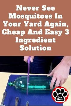 Mosquito Yard Spray, Diy Mosquito Repellent, Natural Mosquito Repellant, Mosquito Repelling Plants, Insect Repellent, Diy Mosquito Trap, Mosquito Killer, Mosquito Trap Homemade, Tick Repellent For Humans