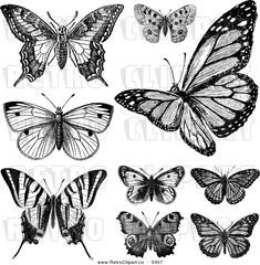vintage drawings and pictures | Vector Clipart of Retro Black and White Vintage Butterflies on White