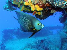 snorkeling in the beautiful john pennekamp coral reef state park in key largo, florida