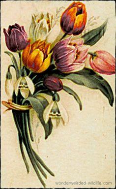 Vintage Flower Pictures