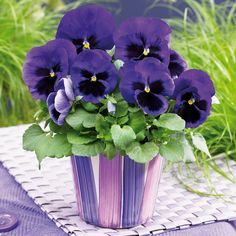 paintings of pansies in 3 pots - Yahoo Image Search Results
