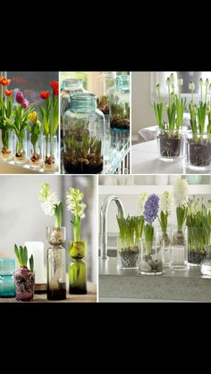 Bulb Flowers, Banquet, Planting Flowers, Flower Arrangements, Glass Vase, Indoor, Display, Spring, Inspiration
