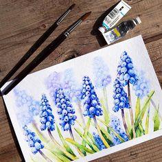 Blue muscari весенние мускарики @Hahnemuhle torchon paper, @winsorandnewton watercolor