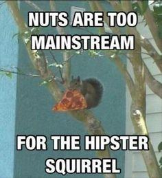 modern squirrel