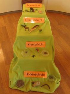 Sekundarstufe I: Bioversum Kranichstein : Museum biologischer Vielfalt
