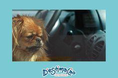 Quais os perigos para os cães do sobreaquecimento gerado no interior dos automóveis?