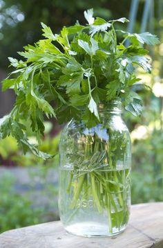 The Easiest Way to Preserve Parsley — Herb Gardening 101