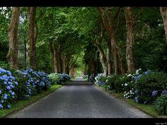 Cobblestone road, Azores