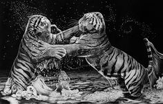 Tiger is the biggest cat in the whole entire World, because of this- tiger stands for strength. In China, the tiger is considered the king of all beasts (not the lion) and represents powerful energ...