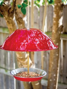 Learn how to make your backyard the ultimate year-round oasis for wild birds and their families. Plants To Attract Hummingbirds, How To Attract Birds, Make A Bird Feeder, Humming Bird Feeders, Hummingbird Pictures, Bird House Kits, Unique Roses, Backyard Birds, Raised Garden Beds
