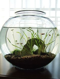 45 Stunning Aquarium Design Ideas for Indoor Decorations - Page 6 of 45 - SooPush Mini Aquarium, Aquarium Fish Tank, Planted Aquarium, Indoor Water Garden, Indoor Plants, Room With Plants, Aquarium Design, Paludarium, Fish Ponds