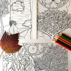 Five Coloring Pages  North American Trees  JPG by EvvieMarin