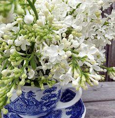Enjoy your Fresh Cut Lilacs Longer via @homeinFLX