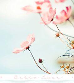 キレイなピンクのお花?名前はなあに?