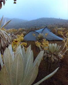 Agadir Morocco, Waffle, Bella, Flora, Nature, Venezuela, Colombia, Hiking Trails, Natural Playgrounds