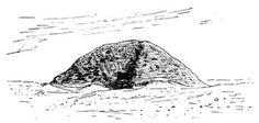 Cuaderno de Historia, J. Ossorio: Hawara, W. M. Flinders Petrie