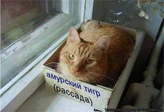 Не почкование: oksanasemenova