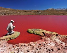 "The Red Lagoon is located at approximately 3700 meters above sea level in the Arica and Parinacota Region, in northern Chile. It is accessible from the town of Camiña, located 147 km from the city of Iquique. This lake of hot water (about 40-50 °C) is also called ""Red Sea"" by the local people. Its depth is unknown to the locals who attribute supernatural powers to the red water. There are myths of mysterious disappearances and deaths of Aymara Indians who drank the water."