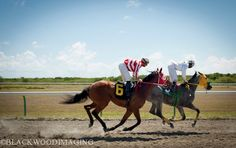 Horse racing on St. Croix.