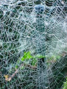 spider webs... But please keep the spiders....