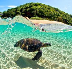with Sea Turtles in Hawaii The Caretta-Caretta turtle, Zakynthos Island (Ionian), Greece. Find similar on -The Caretta-Caretta turtle, Zakynthos Island (Ionian), Greece. Find similar on - Cute Funny Animals, Cute Baby Animals, Cute Turtles, Sea Turtles, Ocean Turtle, Turtle Beach, Turtle Love, Happy Turtle, Jungles