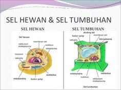 perbedaan sel hewan dan sel tumbuhan pdf,beserta fungsinya,persamaan,beserta penjelasan,dalam bentuk tabel,gambar,sel prokariotik dan eukariotik,