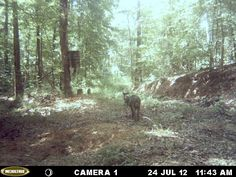While we were able to catch a great number of Wild hogs on the trail cam this year, we were unable to invite one home for the freezer. Luckily, hog season runs all year. We'll try again after deer season. http://ithappensinalabama.com