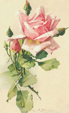 pink rose by Catharina Klein                                                                                                                                                                                 Mais