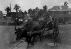 Karabao Wagon in the Village | Flickr: Intercambio de fotos