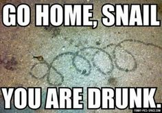 funny animals, snails, party animals, hilarious memes, funny captions, funny pictures, funni, homes, animal memes