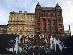 Le tigre de Glasgow