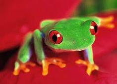 Tree Frog Pictures Biography The Tree Frogs, one of the West Coast's grooviest psychadelic jam bands of all time, has reunited for a speci. Les Reptiles, Reptiles And Amphibians, Frog Wallpaper, Windows Wallpaper, Wallpaper Wallpapers, Mobile Wallpaper, Frog Pictures, Forest Pictures, Animal Pictures