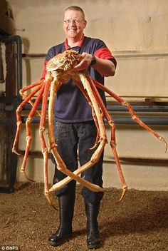 King of Kings Crab