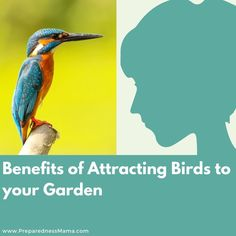 Welcome these beautiful pest eliminators into your garden by providing food, shelter, and water. Attracting birds to your garden can be fun & educational.