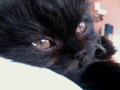 Beautiful Black Cats (=`ェ´=) <`.^^