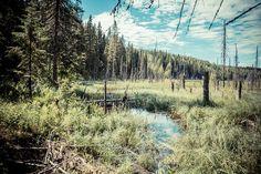 Kesälomareissu Pohjois-Karjalaan Kuvina  http://www.melancholic.photos/photography/kesalomareissu-pohjois-karjalaan-kuvina/ #loma #vacation #pohjoiskarjala #karjala #landscape #nature #photo