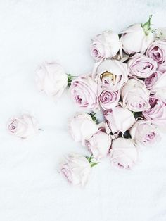 prettiest pale purple roses <3