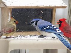 All About Feeding Birds in Winter Foods, Feeders & More! is part of Tips For Feeding Birds In Winter The Spruce - Tips for feeding birds in winter, including the best feeders and seed to keep birds happy and healthy in the worst weather Feeding Birds In Winter, Wild Birds Unlimited, Bird Seed Ornaments, What Is A Bird, Food Feeder, Bird House Kits, Bird Aviary, Wild Bird Food, How To Attract Birds