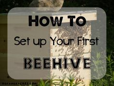One blogger explains how they set up their first beehive.
