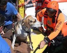 Le cronache animali: Prontuario soccorso animali da portare sempre con ...